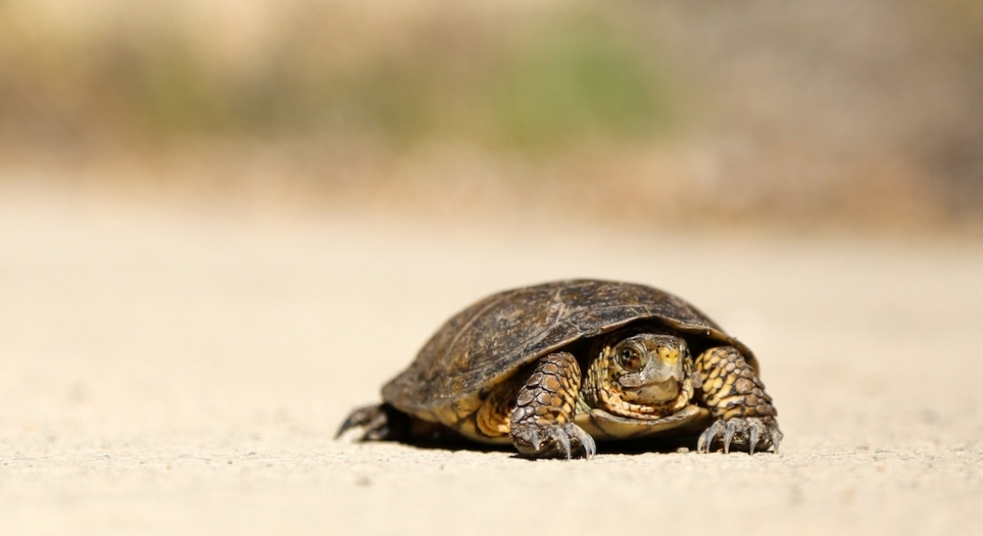 A need for slowing down and how we can leverage it